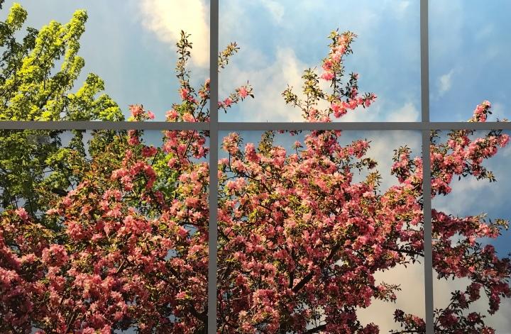 Die Bestrahlung, der Dreamball und Kirschblütenbäume